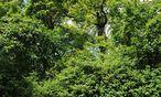 In Schönstheim gibts nur viel Gegend: Symbolbild Wald / Bild: Fabry