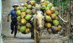 Der Klimawandel bringt Erschütterung der Agrarwirtschaft und steigende Lebensmittelpreise mit sich. Armut könnte sich weiter ausbreiten, warnt die Weltbank. / Bild: REUTERS