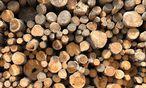 Zum Verbrennen zu schade? Die Papierindustrie wirft der Kärntner Biomasse Prügel zwischen die Beine. / Bild: (c) Clemens Fabry