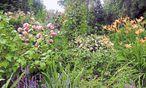 Wie lege ich meinen eigenen Garten an? Die Bilder sollten erst im Kopf entstehen. / Bild: Ute Woltron
