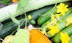 Eveline Bach kultiviert in ihrer Gärtnerei 20 verschiedene Gurkensorten – etwa die lange Schlangenhaargurke oder die Weiße aus Gargano – und 100 Chilis. / Bild: Die Presse