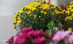 Blumensträuße / Bild: (c) Teresa Zötl