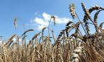 Rohstoffe: Agrarfonds sind begehrt / Bild: (c) Clemens Fabry