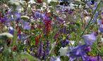 Symbolbild Blumenwiese / Bild: Clemens Fabry