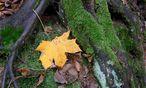Herbstblaetter / Bild: www.BilderBox.com