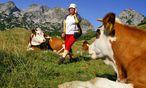 Kühe auf der Alm und Wanderin / Bild: www.BilderBox.com