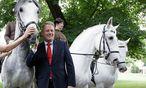 Minister Rupprechter als Pferdeflüsterer / Bild: (c) APA/GEORG HOCHMUTH (GEORG HOCHMUTH)