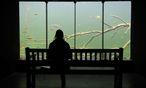 Spektakulär: Fische beobachten in der Unterwasserstation. / Bild: (c) Clemens Fabry