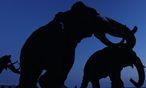 War das Klima am Aussterben der Megafauna schuld? / Bild: EPA