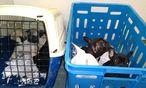Diese Tiere waren auf der Straße feilgeboten worden / Bild: (c) APA/POLIZEI