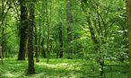 Es gibt weltweit viel mehr Bäume als Menschen. / Bild: (c) Die Presse (Clemens Fabry)