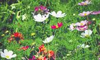 Nur selten fühlt sich der Sommer im Garten perfekt an. / Bild: Ute Woltron