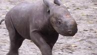 Nachwuchs im Berliner Zoo / Bild: (c) Reuters (Reuters, OCT 24 RTV, OCT 24)