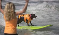US-HOUNDS-HANG-TEN-AT-ANNUAL-DOG-SURFING-COMPETITION