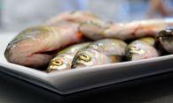 Frische Fische / Bild: (c) Die Presse (Clemens Fabry)