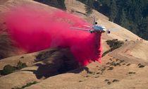 US-FIRE-ENVIRONMENT / Bild: (c) APA/AFP/NOAH BERGER (NOAH BERGER)