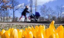 Symbolbild Frühling