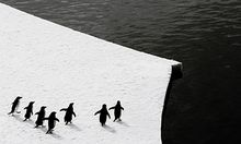 Gescheitert Keine Meeresschutzgebiete Antarktis