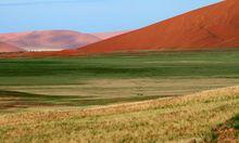 Nach Regen mutiert die aride Namib-Naukluft-Region kurz zur Oase.