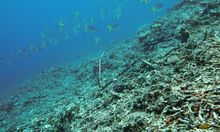 Korallenriff vernachlaessigt Australien gesteht