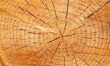 Wunderstoff Holz effizienter nutzt