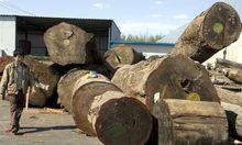 China exportiert Entwaldung rund