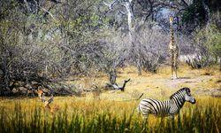 Auf Safari im Okavangodelta / Bild: Imago