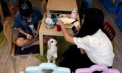 The Wider Image: Tokyo´s Hedgehog cafe / Bild: (c) REUTERS (� Bobby Yip / Reuters)