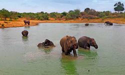 Überall Rüssel. Wieso tippen die Elefanten nicht? / Bild: (c) Beigestellt