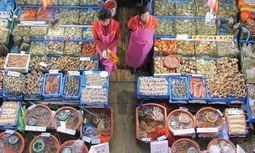 Meer. Noryangjin ist der Umschlagplatz für Fisch in den abenteuerlichsten Formen.  / Bild: (c) Anna Burghardt