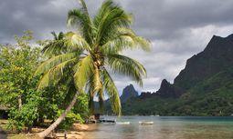 Sündhaft schön. Traumbucht auf Moorea, der kleinen Schwester von Tahiti. / Bild: (c) Win Schumacher