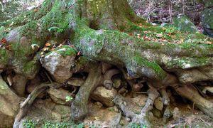 Wald / Bild: (c) www.BilderBox.com (www.BilderBox.com)