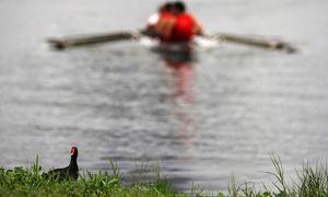 Dieses brasilianische Teichhuhn (Galinha) wundert sich: In der Lagoa de Freitas herrscht neuerdings größeres Gedränge.  / Bild: (c) REUTERS (SERGIO MORAES)