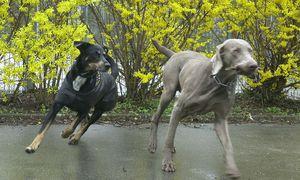 Hunde / Bild: (c) Clemens Fabry