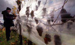 Themenbild: Wein / Bild: (c) EPA (Stephanie Pilick)