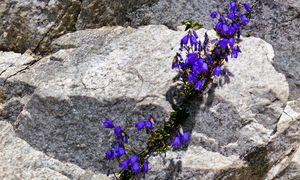Diese Blumen wissen, wie man Sonnenstrahlung effizient in Wärme verwandelt. / Bild: (c) Erwin Wodicka / wodicka@aon.at