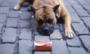 Archivbild: Ein Staffordshire Terrier / Bild: Imago