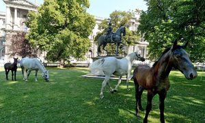 Archivbild: Lipizzaner-Fohlen auf Sommerfrische im Juli 2014 / Bild: APA