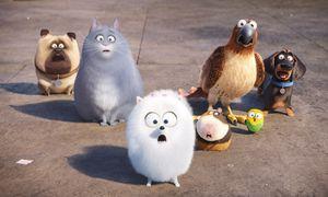 """Was machen unsere Haustiere, wenn wir nicht dabei sind? In """"Pets"""" nichts allzu Originelles.  / Bild: Universal"""