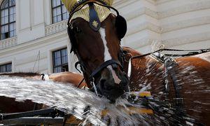 Ein Wiener Fiakerpferd am vergangenen Samstag / Bild: REUTERS