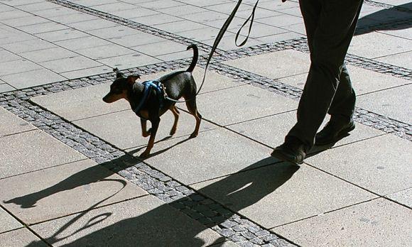Partnersuche mann mit hund