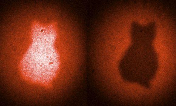 El gato de Schrödinger - fotografiado con la acción fantasmal a distancia