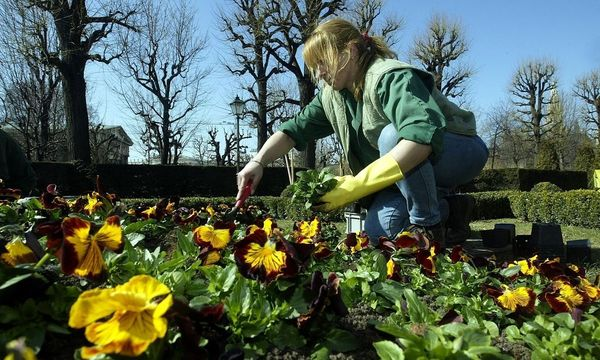 Gärtner gegen Liberalisierung / Bild: APA