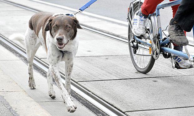 Wien Aktion Scharf In Der Hundezone
