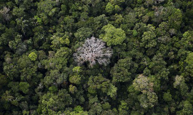 Was aus der Ferne aussieht wie ein ursprünglicher Urwald, zeigt dem näheren Blick viele Nutzpflanzen, die gesetzt wurden.