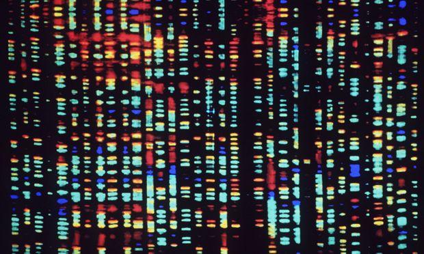 Partnersuche genetik