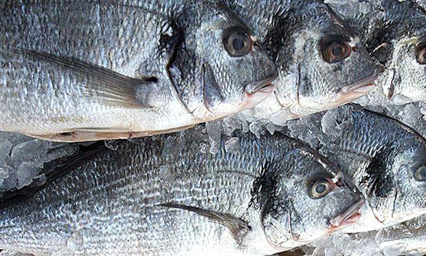Herzschw che fisch l arznei reduziert sterblichkeit for Reduziert leben