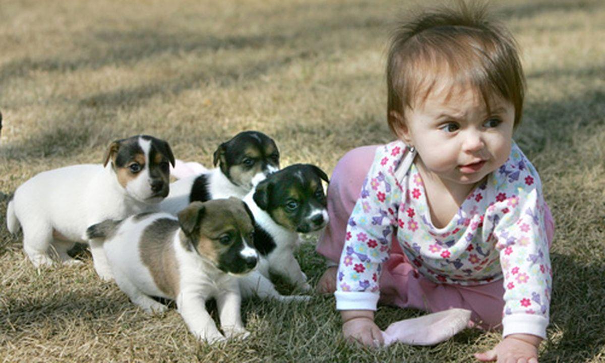 hunde sind gut f r babys gesundheit. Black Bedroom Furniture Sets. Home Design Ideas